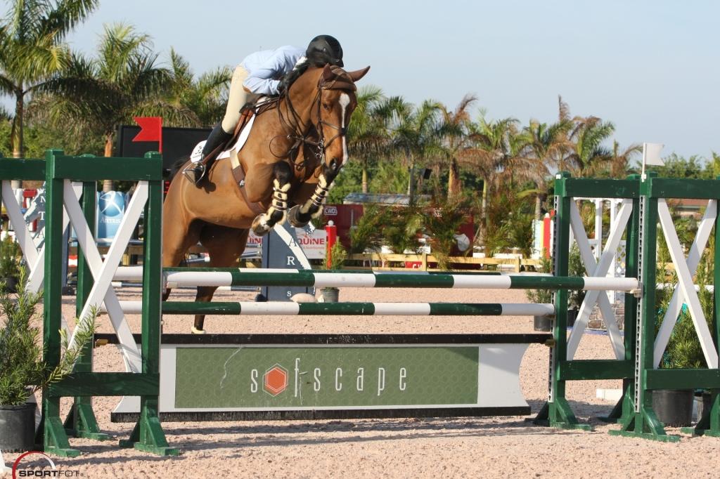 Equine-11
